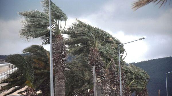 Urla'da fırtına, palmiye ağaçları, rüzgar - Sputnik Türkiye