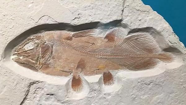 İngiltere'de 66 milyon yıllık balık fosili bulundu - Sputnik Türkiye