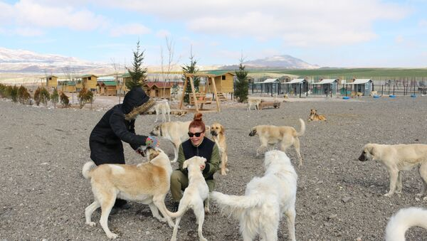 Patipark Hayvanseverler Derneği, 33 dönümlük hayvan barınağı kurdu - Sputnik Türkiye