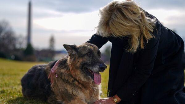 Joe Biden'ın eşi Jill Biden ailenin iki köpeğinden biri olan Champ'le - Sputnik Türkiye