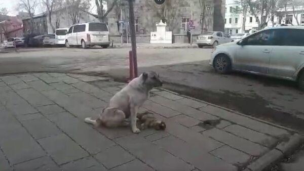Kars'ta bir sokak köpeği, ölen yavrusunun başında saatlerce bekledi - Sputnik Türkiye