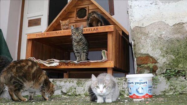Çanakkale, kedi köyü - Sputnik Türkiye