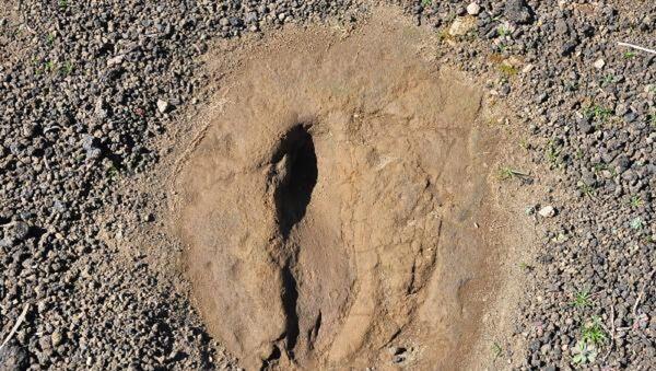 Kula-Salihli UNESCO Global Jeoparkı'ndaki ayak izleri  - Sputnik Türkiye