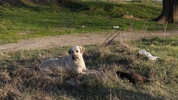 Edirne'de yakılarak öldürülen yavru köpekler - Sputnik Türkiye