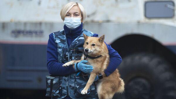 Narkotik köpeği - Sputnik Türkiye