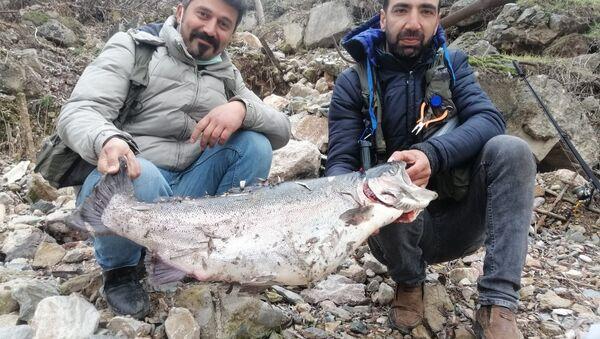 Türkiye ve Avrupa'nın en büyük alabalığı Elazığ'da yakalandı - Sputnik Türkiye