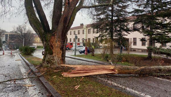 Meclis bahçesindeki bir ağaca yıldırım düştü - Sputnik Türkiye
