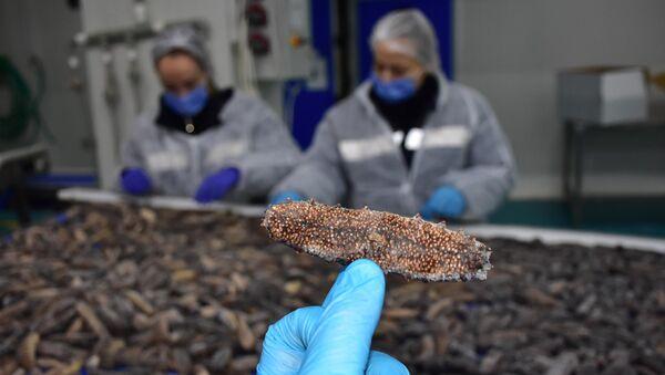 Türkiye'de tüketilmeyen deniz patlıcanı, Uzakdoğu ülkelerine ihraç ediliyor - Sputnik Türkiye