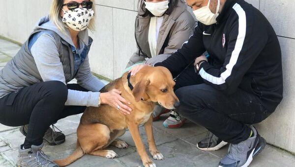 Sahibi ölen köpek 'Köpüş' yeni sahipleriyle - Sputnik Türkiye