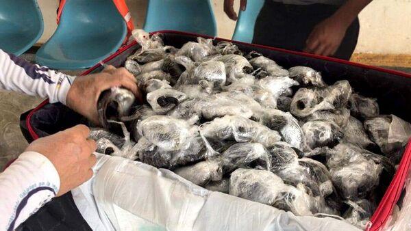 Ekvador'da bir yolcunun valizinde poşete sarılı 185 yavru kaplumbağa ele geçirildi - Sputnik Türkiye