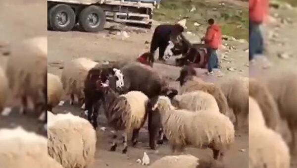 Eşeğini döven çobana 1033 lira para cezası - Sputnik Türkiye