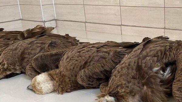 Afyon'da zehirli etlerden öldüğü iddia edilen akbabalar - Sputnik Türkiye