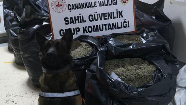 Ele geçirilen  'damiana' otu  - Sputnik Türkiye