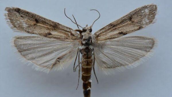 Ağrı Dağı'nda yapılan araştırmalarda yeni bir kelebek türü belirlendi. - Sputnik Türkiye
