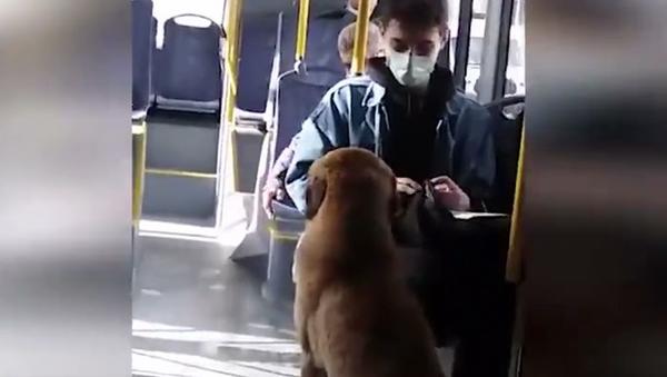 Belediye otobüsünde takılan köpek - Sputnik Türkiye