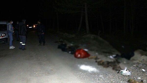 Damar yolu açılmış 30 köpek ölüsü bulundu  - Sputnik Türkiye