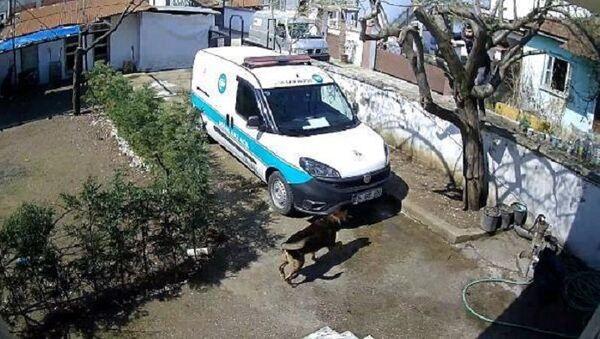 köpekten kaçarak ağaca tırmanan kurye, Sakarya - Sputnik Türkiye
