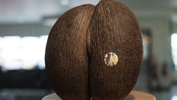 Dünyanın en büyük tohumu 'coco de mer'den 8 bin tane kaldı: Meyve vermesi 50 yıl sürüyor - Sputnik Türkiye