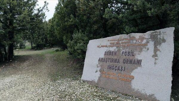 Seben Fosil Ormanı, Hoçaş, Bolu - Sputnik Türkiye