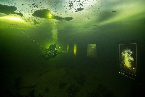 Kentin kıyısındaki buz tutan Beyaz Deniz'in derinliklerinde sergi açan sanatçılar, toplam 18 fotoğraf sergiledi. - Sputnik Türkiye