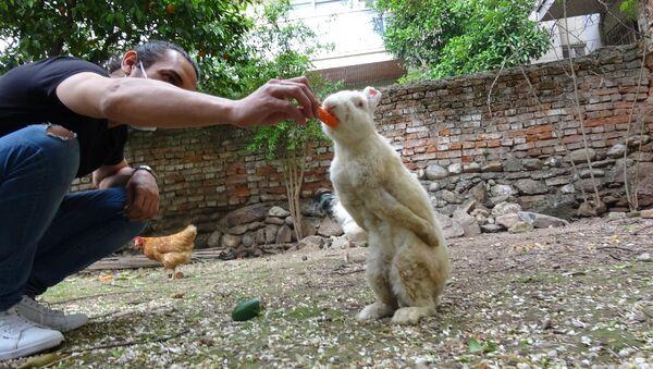 denek tavşanı Zulu, 269 Vegan Atölyesi, Aydın - Sputnik Türkiye