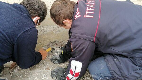 Su tahliye borusuna sıkışan kaplumbağa 1 saatte kurtarıldı - Sputnik Türkiye