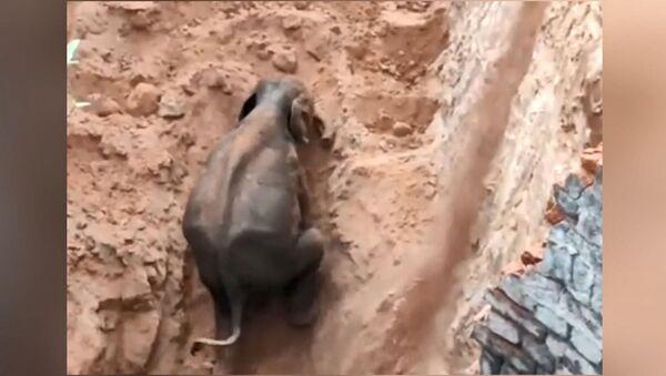 Hindistan'da kuyuya düşen yavru fil kurtarıldı  - Sputnik Türkiye