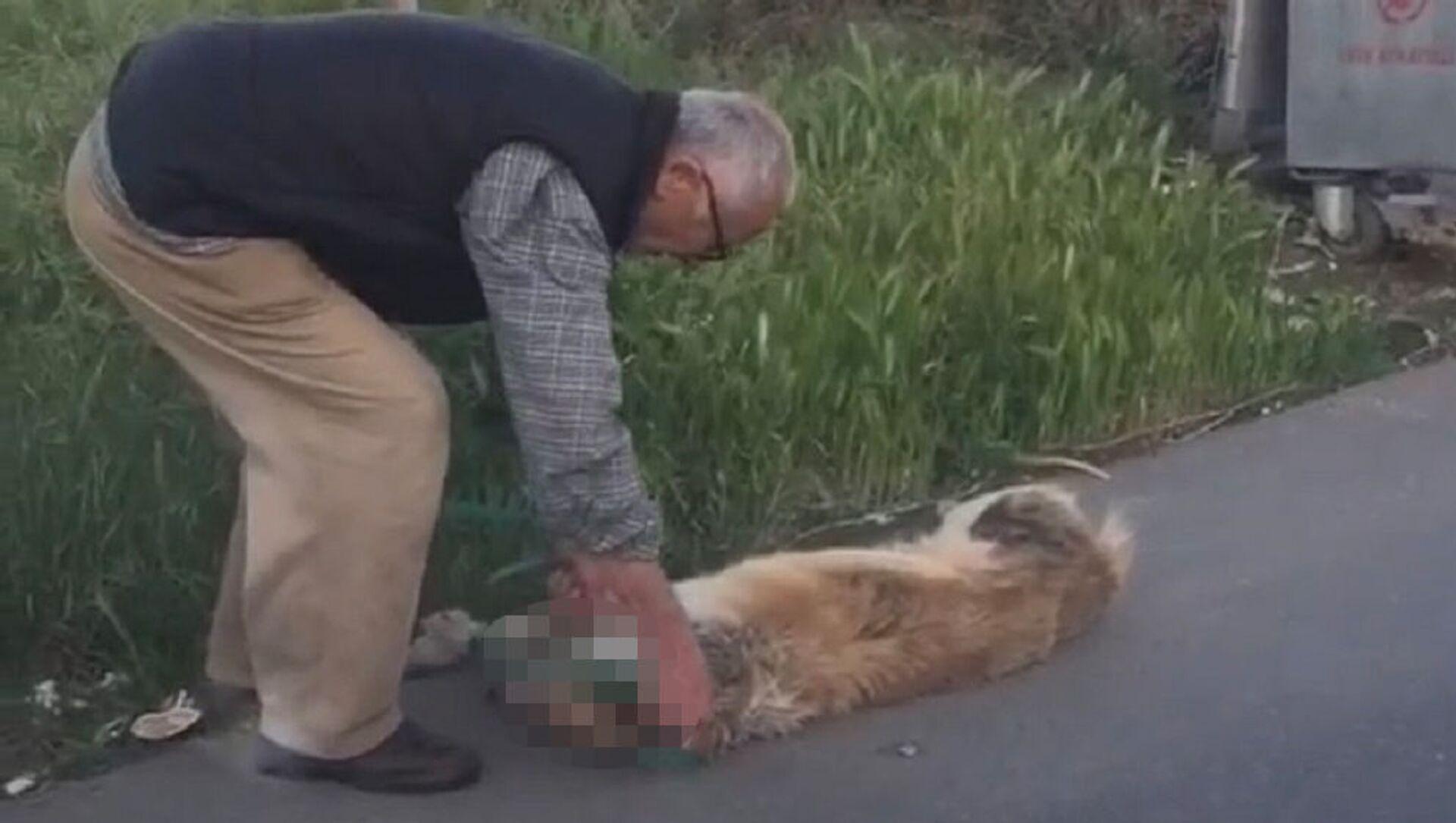 Boğazından bağladığı köpeği sürükleyerek çöpe bırakan adam gözaltına alındı - Sputnik Türkiye, 1920, 06.05.2021