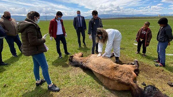 Ayağı kırılan atı elleriyle beslediler - Sputnik Türkiye