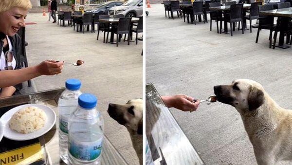 Köpeğe kaşıkla yemek yedirdi, sosyal medyada tartışma konusu oldu - Sputnik Türkiye