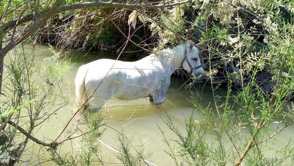 Atları bağlayıp çay yatağında ölüme terk ettiler - Sputnik Türkiye