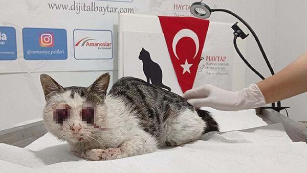Kedinin gözlerini oydular - Sputnik Türkiye