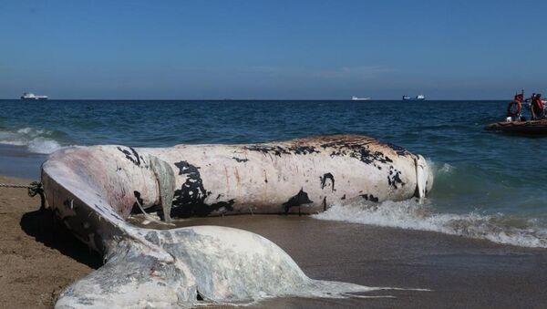 Sahile vuran balina - Sputnik Türkiye