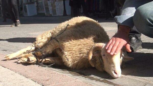 Kütahya'da Pekmezpazarı Caddesi esnafı coronanın bitmesi, ölümlerin sona ermesi için kurban kesti. - Sputnik Türkiye
