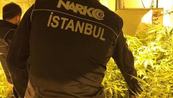Beykoz'da uyuşturucu serasına çevrilen daireye baskın - Sputnik Türkiye