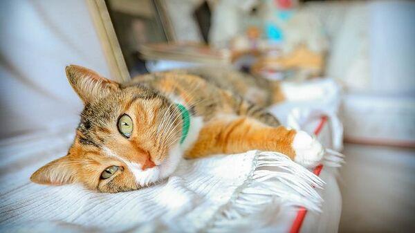 Kedi - Sputnik Türkiye