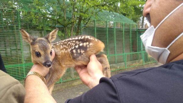 Zonguldak'ın Devrek ilçesine bağlı Yeşilöz köyünde ormanlık alanda avcılar tarafından annesi vurulan 10 günlük karaca yavrusunu sokak köpeği kurtardı. - Sputnik Türkiye