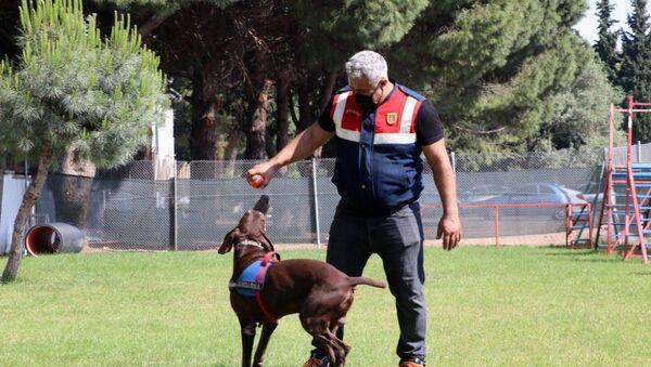 Dedektör köpek Volta'nın 'emekliliği' jandarma personelini üzdü - Sputnik Türkiye