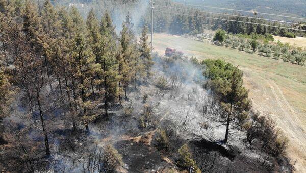 Arıcı hem kendini hem de ormanı yaktı - Sputnik Türkiye