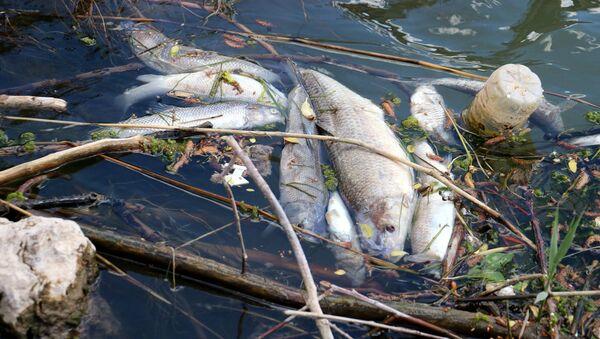Türkiye'nin en uzun nehrinde toplu balık ölümleri - Sputnik Türkiye