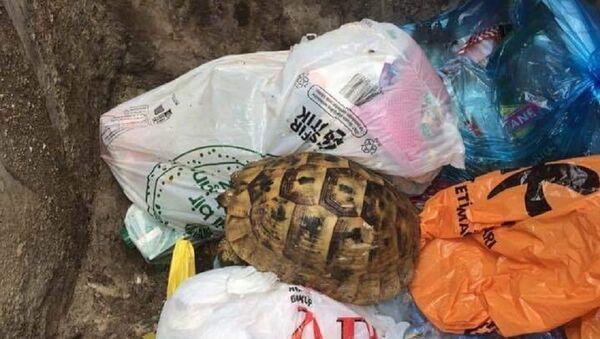 Çöpe atılan kaplumbağa - Sputnik Türkiye