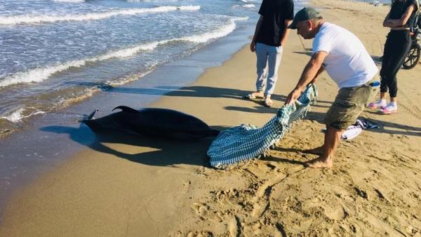2 gün önce kurtarılan hamile yunusun cansız bedeni kıyıya vurdu - Sputnik Türkiye