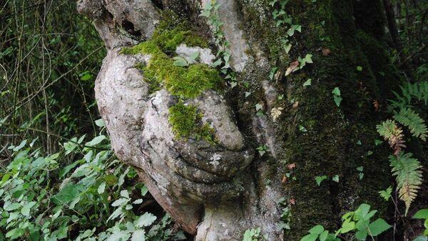 Tesadüfen fark edilen el figürlü ağaç koruma altına alındı - Sputnik Türkiye