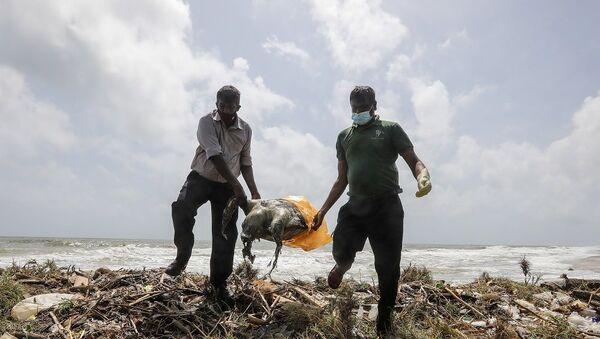 Sri Lanka'da gemi yangınından sonra ölü kaplumbağalar kıyıya vurdu - Sputnik Türkiye