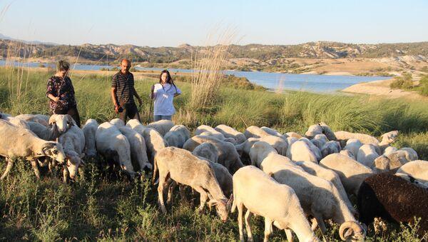 Almanya'dan dönüp çobanlık yapan aile - Sputnik Türkiye