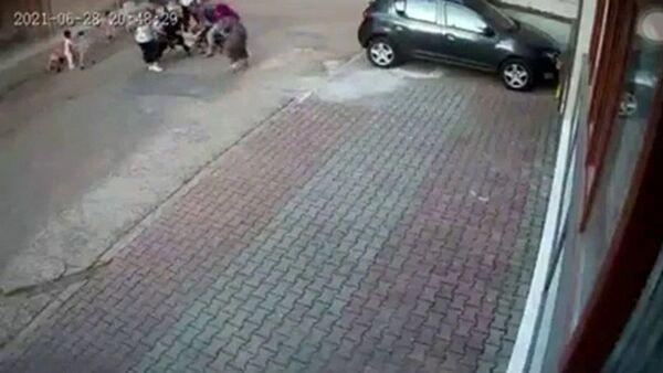 çocuğa saldıran köpek - Sputnik Türkiye