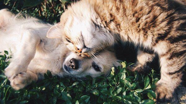 Kedi - köpek - Sputnik Türkiye