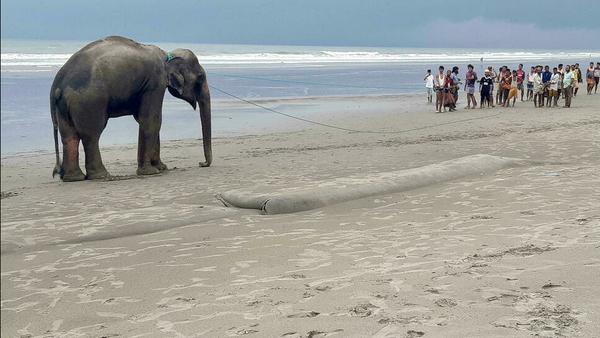 Elephants led to safety after Bangladesh beach ordeal - Sputnik Türkiye