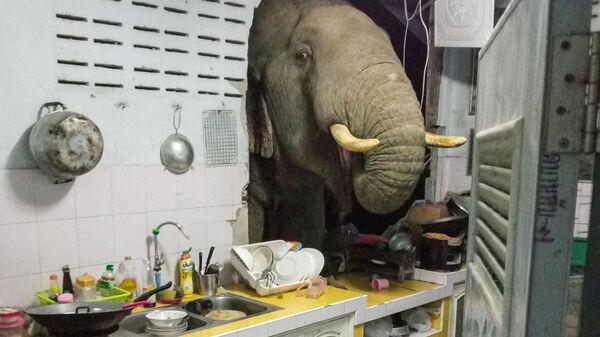 Radchadawan Peungprasopporn'un Facebook hesabında paylaştığı evinin mutfak duvarını yıkan Plai Bunchuay isimli 40 yaşındaki erkek fil - Sputnik Türkiye