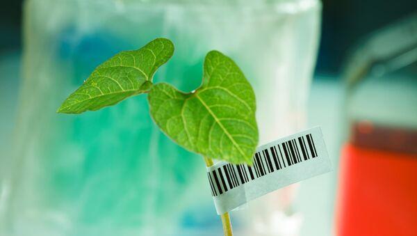 DNA Barkodlama yöntemiyle bitkilere kimlik  - Sputnik Türkiye